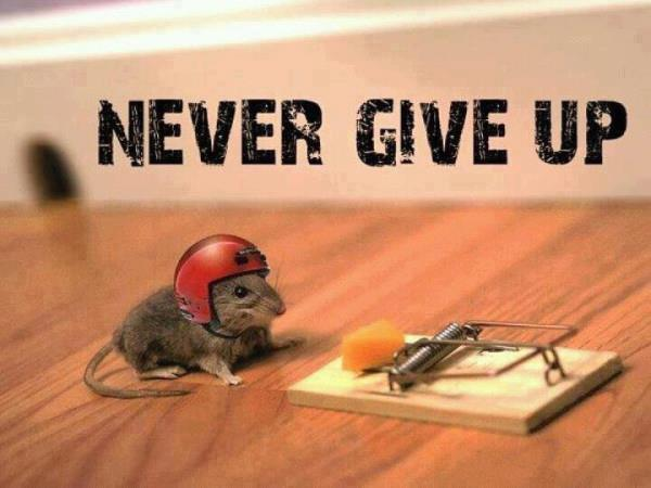NEVER GIVE UP !