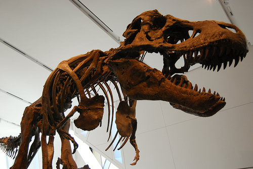 Most Dinosaur Bones Discovered are Radioactive