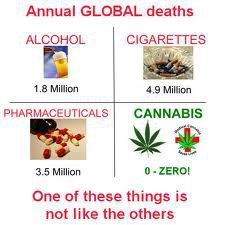 Annual Global Deaths