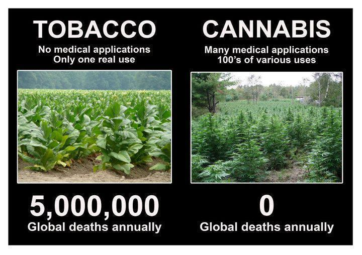 Tobacco vs Cannabis