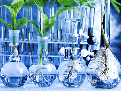 Genetic Engineering: The Global Food and Agricultural Crisis