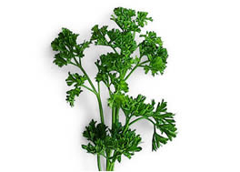 parsley_-d1_small