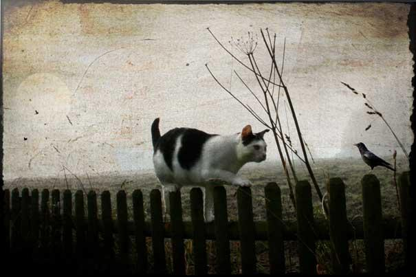 13-Interesting-Facts-about-Dreams-cat