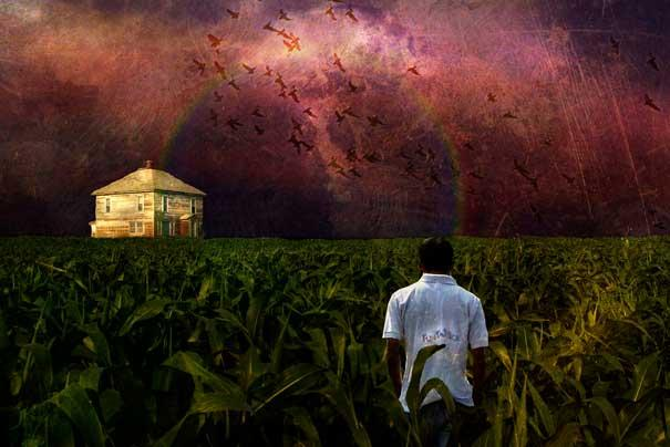13-Interesting-Facts-about-Dreams-cornfields