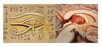 10 questions about the pineal gland that add to the