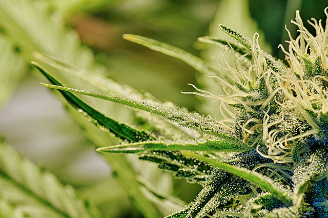 Cannabis Shows Great Promise In Treating Autism and Its Symptoms