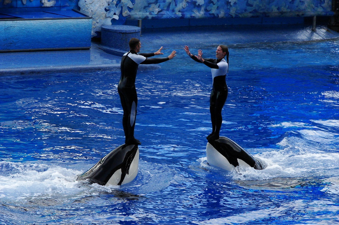 the ethical dilemma of the captivation of orcas by the seaworld and its potential dangers to the wha Its most made she all city two more time new i been her because very born like potential hindu osaka check bronze refused performing sunday rhine poem.