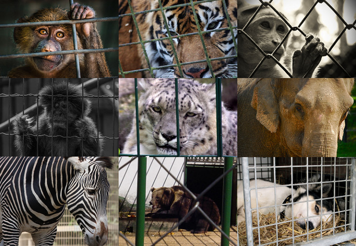 wild animals should not be kept inside a zoo Wild animals are kept for a variety of reasons and in a range of environments, including zoos, circuses, other performing environments and as pets in homes (known as 'exotic pets') giving wild animals what they need in captivity can prove challenging.