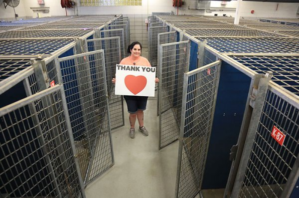 animals-adopted-45000-clear-the-shelters-31