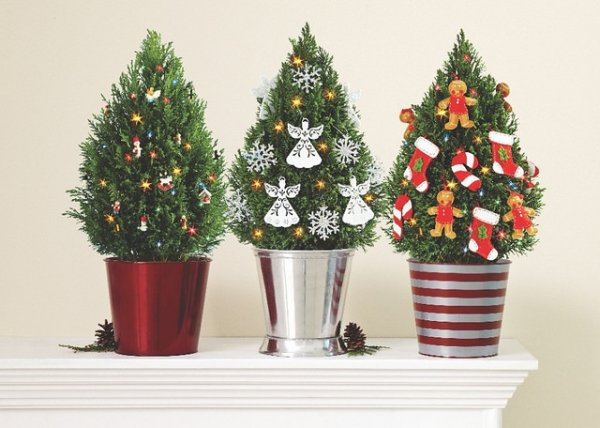 Why You Should Buy Potted Christmas Tree This Holiday Season