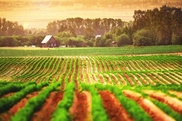 Organic Food Farms In New Jersey