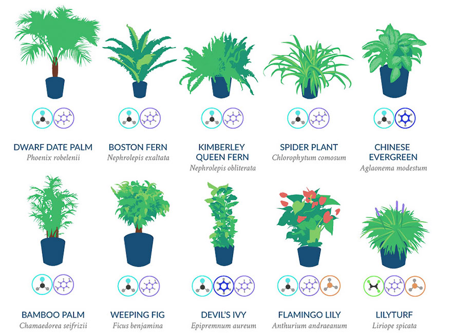 Nasa reveals a list of the best air cleaning plants for for Air filtering plants