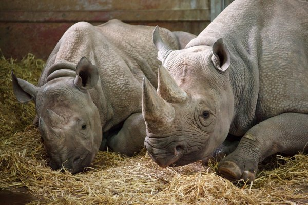 two rhinos at the zoo