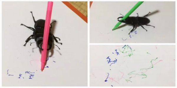 how to draw a stag beetle