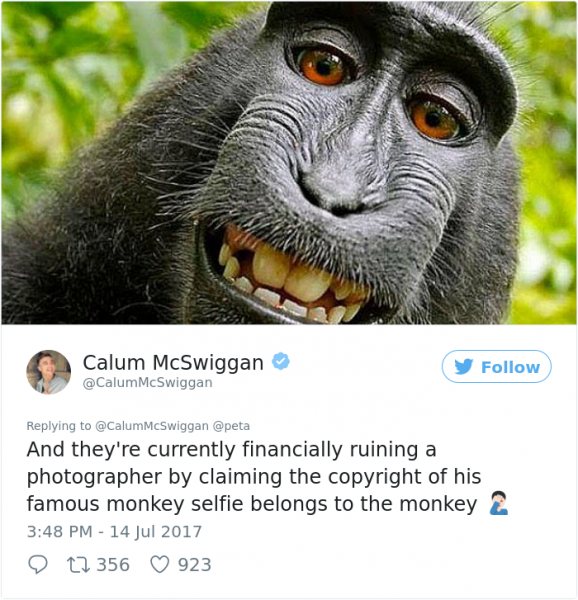 guy sums up peta twitter calum mcwiggan 7