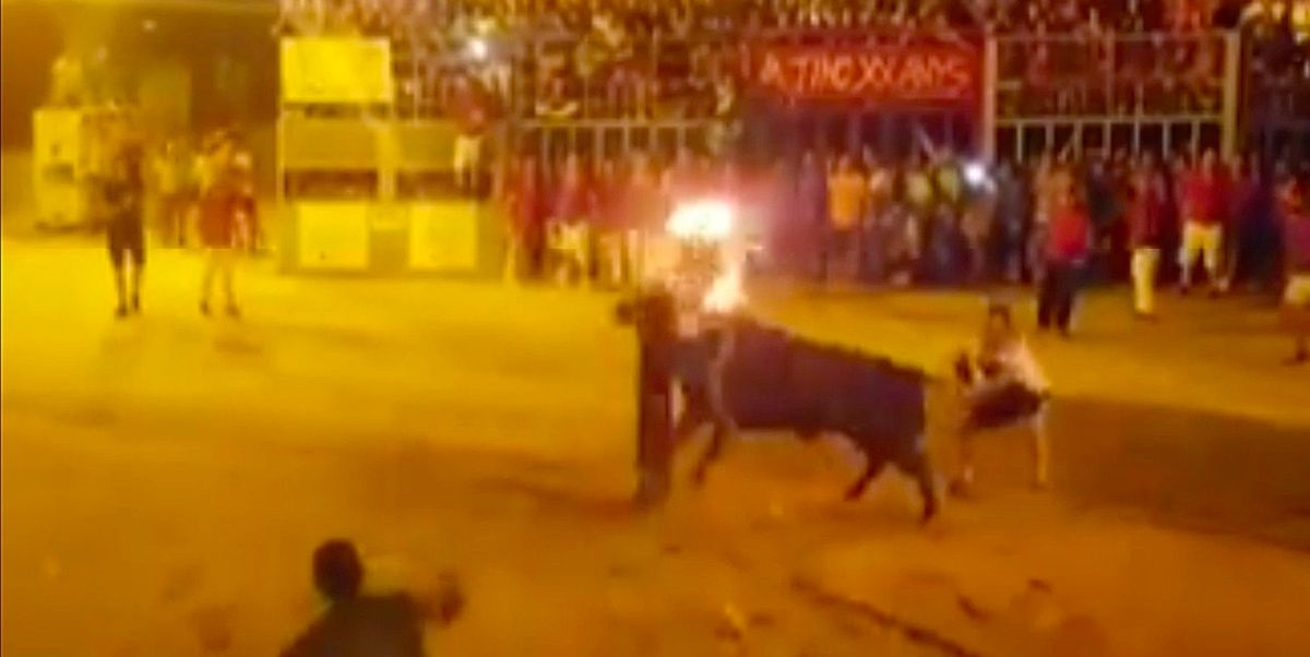 PAY Video shows a Bull dying when it was tormented with its horns on Fire and runs into a post killing i