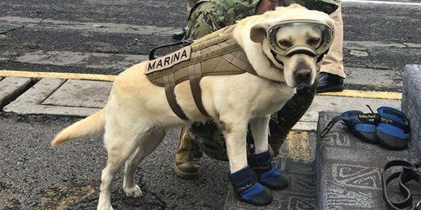mexico earthquake hero rescue dog frida 8 59c3b36c51e93  700