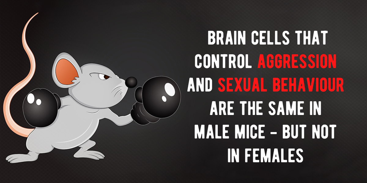 What Part Of The Brain Controls Sexual Behavior
