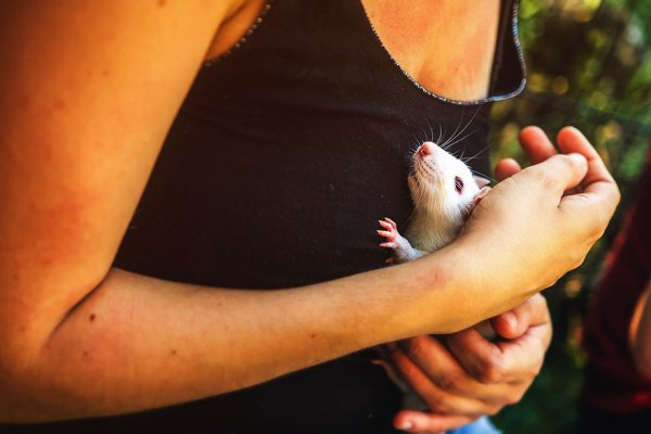 I photographed first time open air for ex lab rats and mice their faces say it all 5a05ab2364771 880