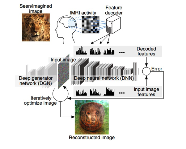 Groundbreaking: New AI Can Decode Thoughts And Recreate Images Screen-Shot-2018-01-11-at-12.45.48