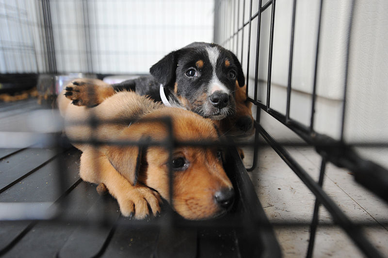 Maryland Becomes Second State To Ban Pet Stores From Selling Puppies