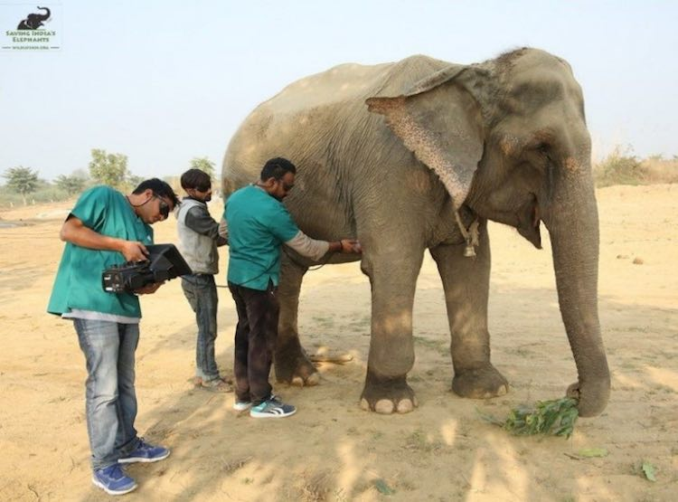 Elephant Being Treated Wildlife SOS Released