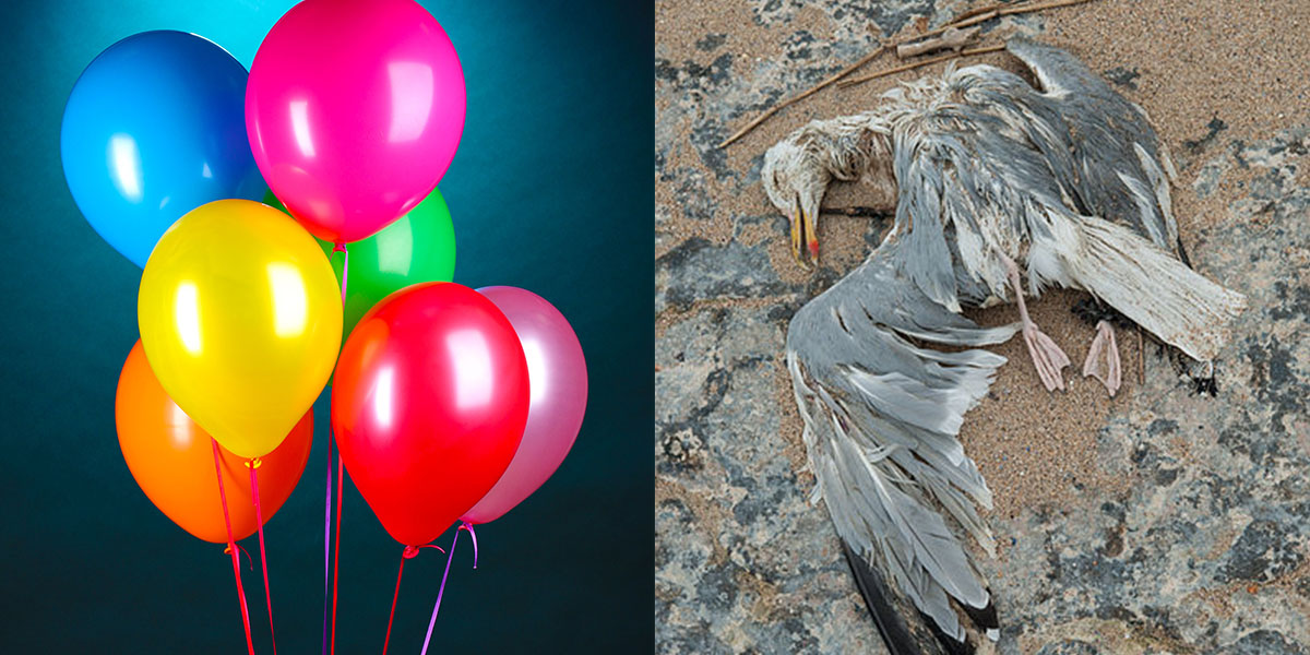 Image result for balloons seabirds