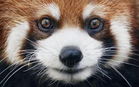 Photographer Spends 2 Years Photographing Animals That May Soon Be Extinct And It Breaks Our Hearts Bored Panda 3