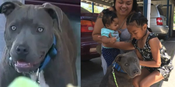 Pit Bull Drags Baby By Diaper From Burning House Saving Whole Family