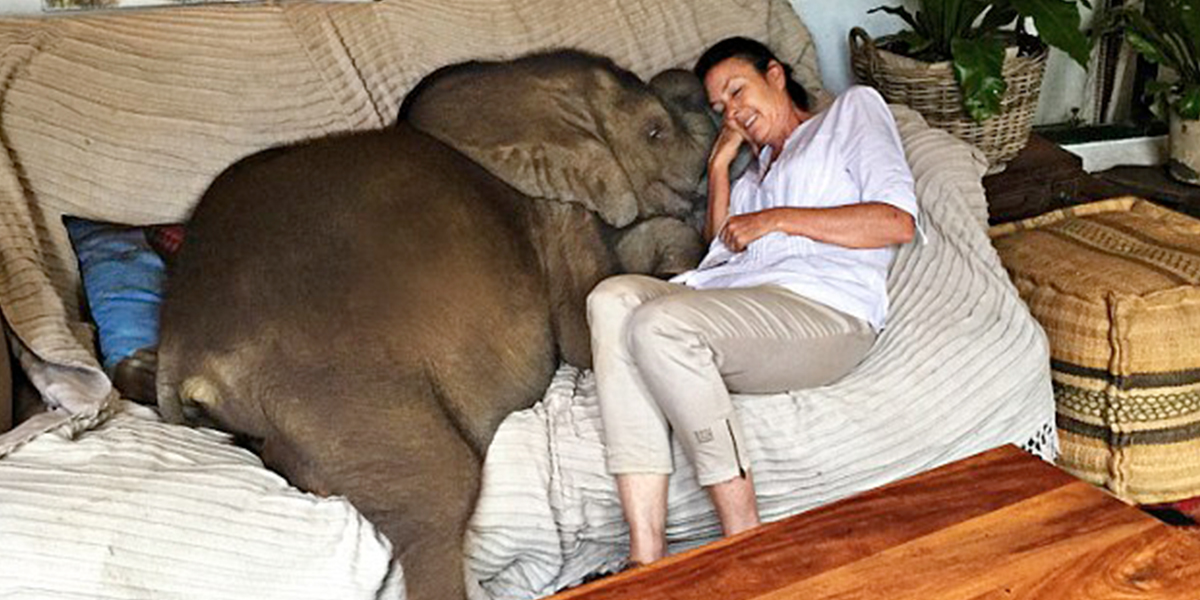 This Baby Elephant Won't Leave Its Rescuer's Side Sdfsdg
