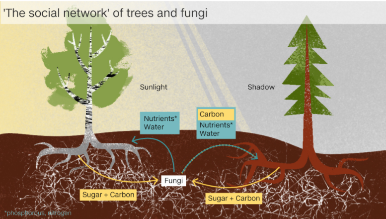 """Trees Communicate With One Another Through The """"Underground Web"""" Trees"""
