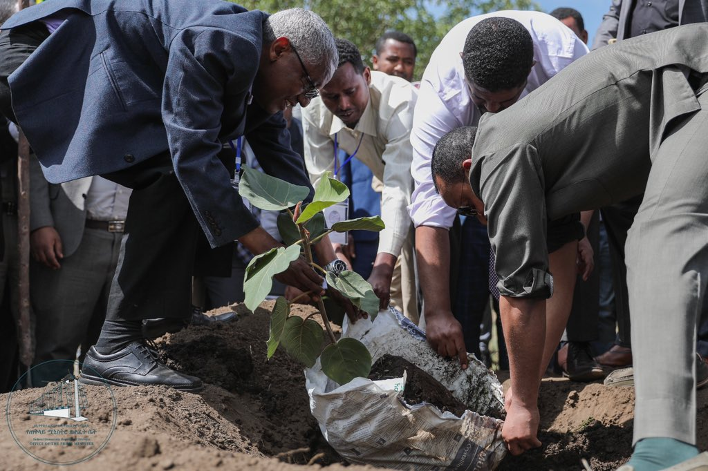 Ethiopia Plans To Plant 4 Billion Trees To Save The Planet PhpRE7QME