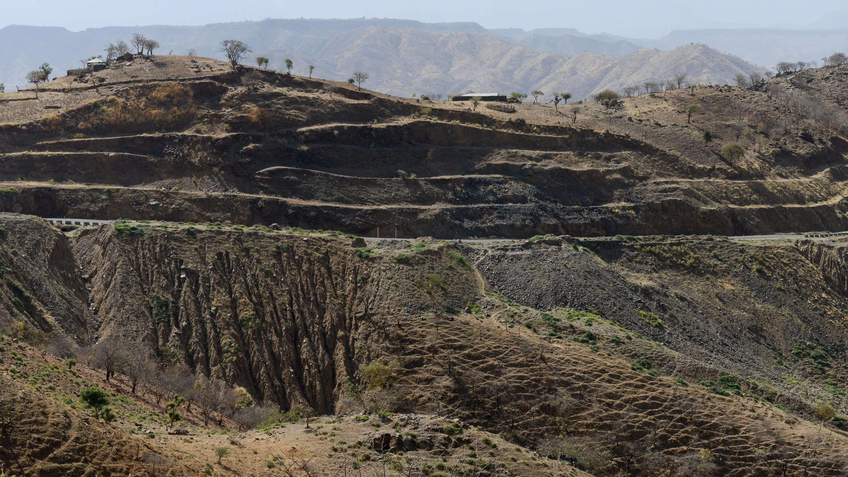 Ethiopia Plans To Plant 4 Billion Trees To Save The Planet PhpooNnPU
