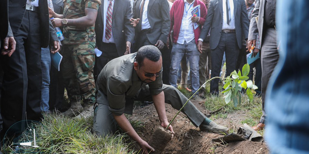 Ethiopia Plans To Plant 4 Billion Trees To Save The Planet Yutkeytk