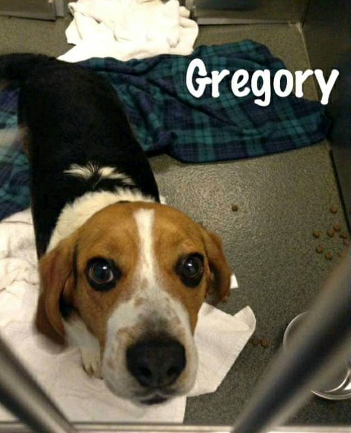 dog scheduled to be put down rescued hugs rescuer hound rescue and sanctuary 5d35a64170f2c 700 1