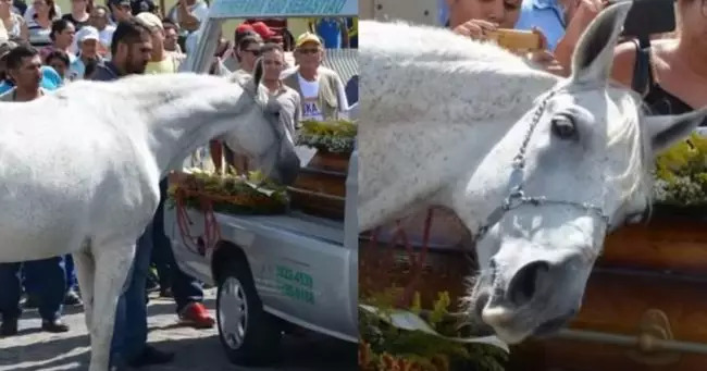 Horse Breaks Down Emotionally After Smelling And Hugging Late Owner's Casket
