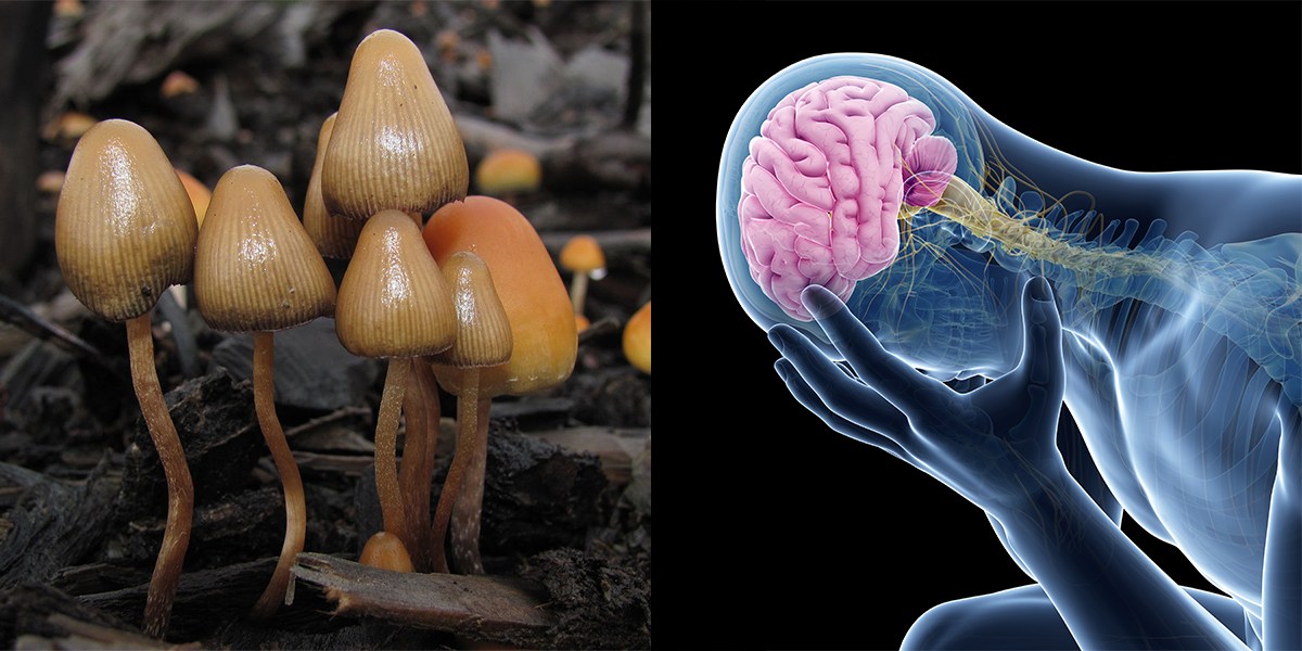 Study Suggests Psilocybin Can 'Reset' The Brains Of Depressed People