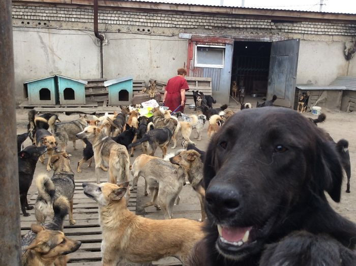9 year old Russian boy trades his art for abandoned dog food and medicine 5da52150b9d7e 700 1