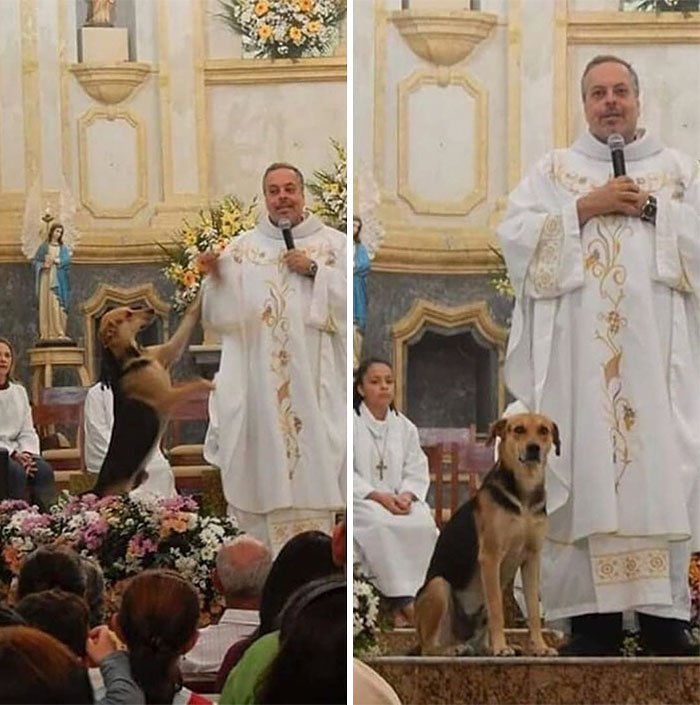 Brazilian priest welcomes stray dogs inside church to be adopted 5daffa16d07f5 700