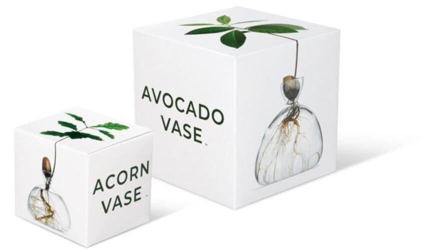 Acorn Vase Avocado Vase boxes1