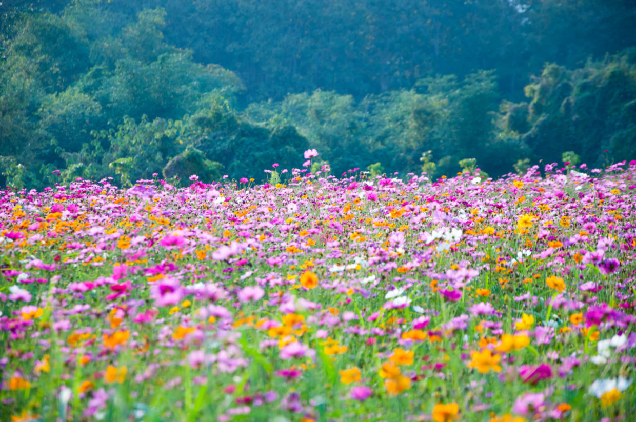 wildflowers can help reduce pesticide usage