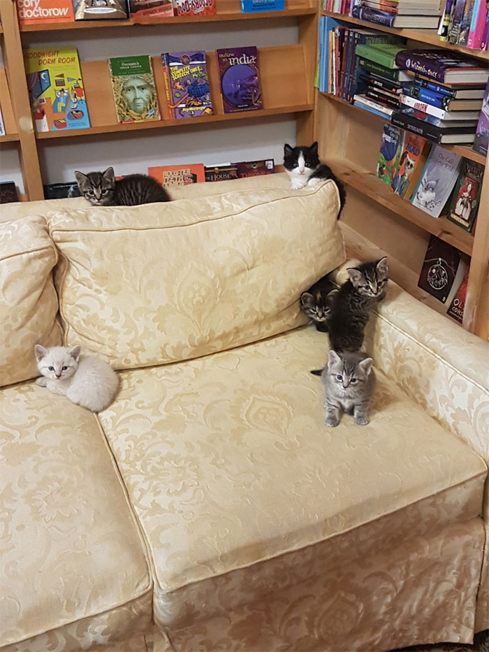 cats at Otis & Clementine's Books & Coffee