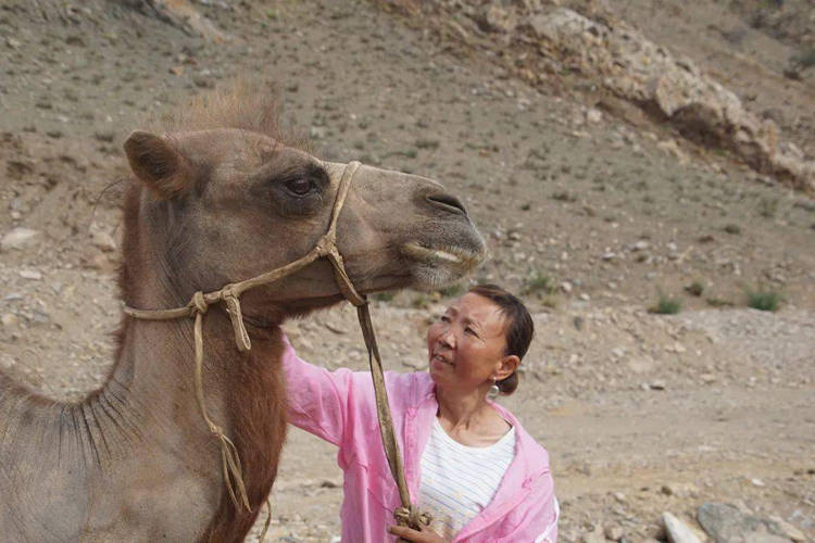Loyal Camel With Lady Owner