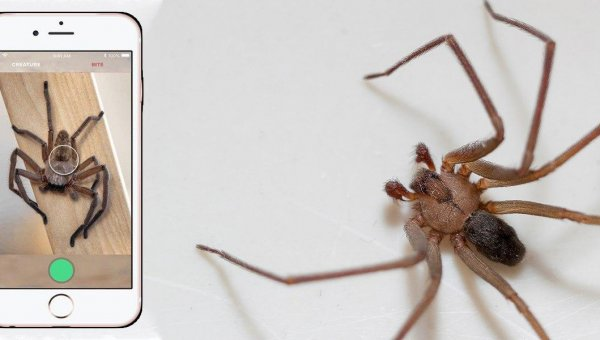 This Australian App Recognises Spiders And Snakes