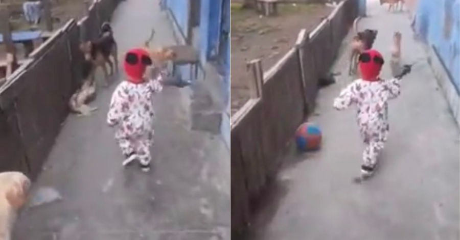 Child Playing With Dogs Ball Appears Out Of Thing Air