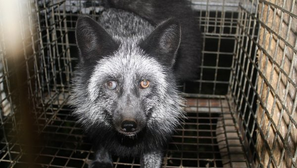 Fur Farming Animal