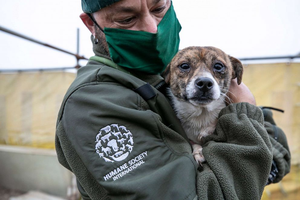 200 Dogs Rescued In South Korean Dog Farms