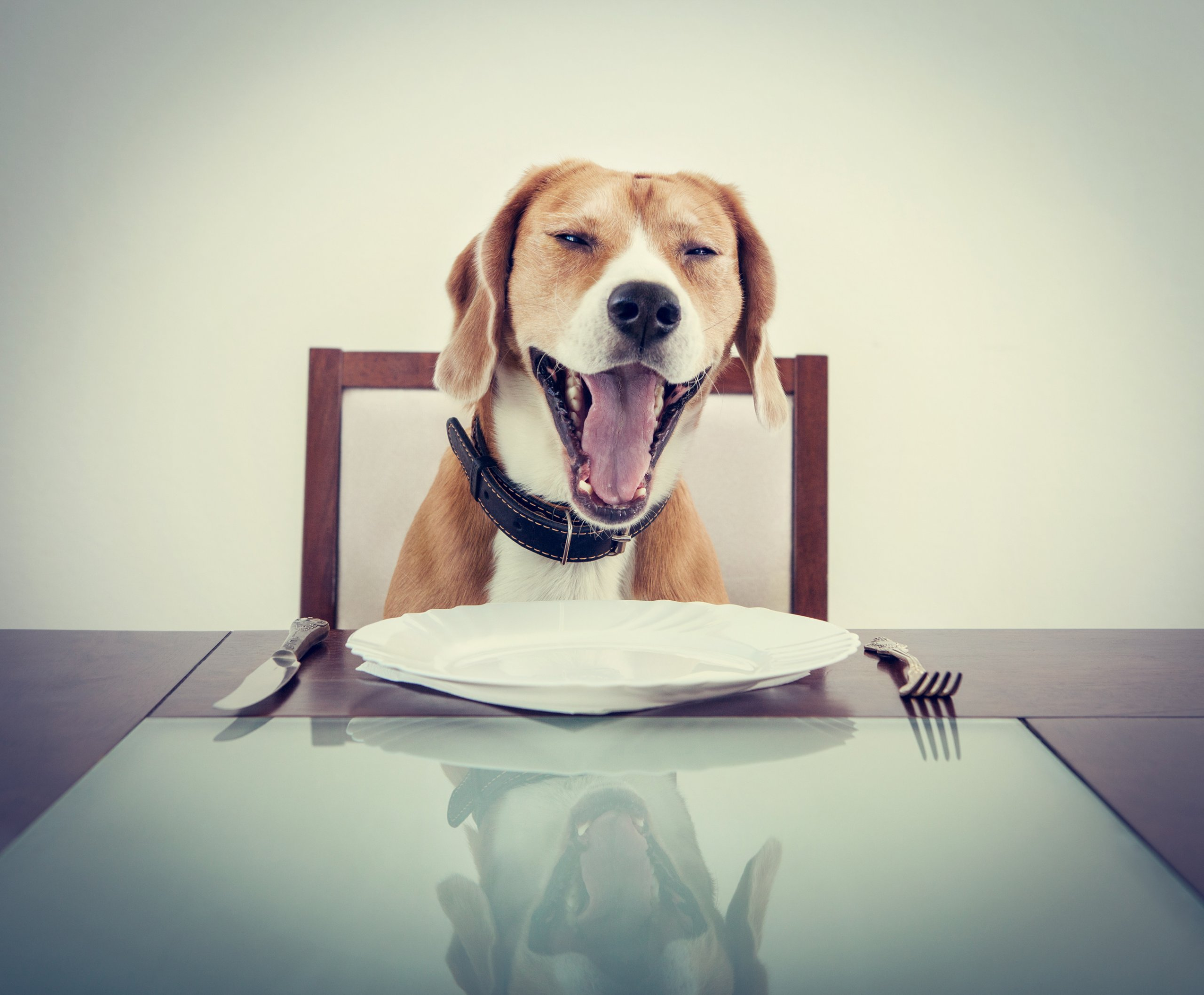 Can Dogs Eat Oatmeal