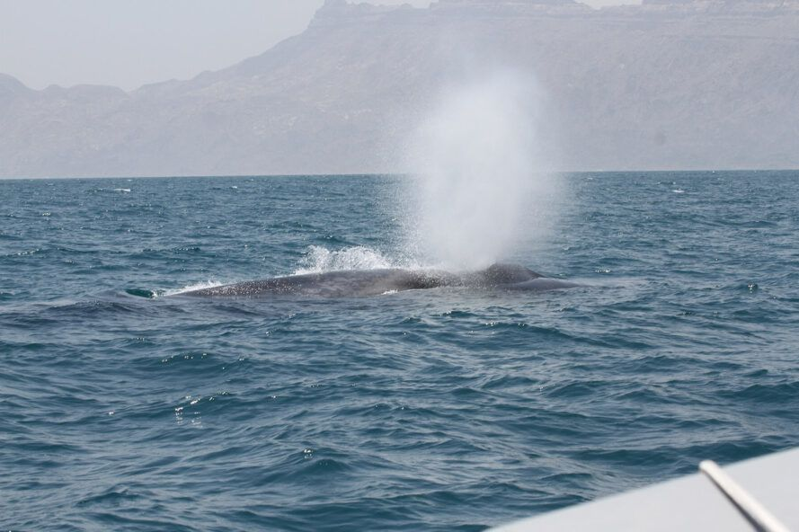 Blue Whale Songs In The Indian Ocean